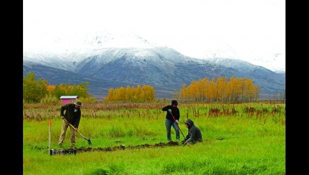 HARVESTING— Dan Martinson, Anahma Shannon and Tasha Lee harvested the first crops at Pilgrim Hot Springs on Friday, Sept. 16.