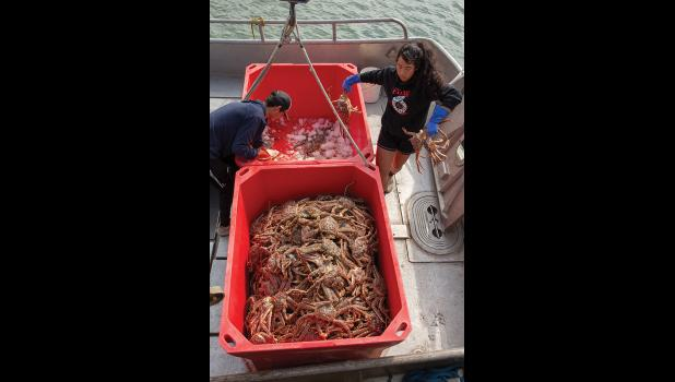 KING CRAB – Addy Ahmasuk and Glenn Ivanoff transfer crab to a tote onboard a fishing vessel docked at Norton Sound Seafood Plant Friday.