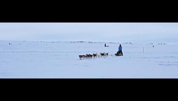 Nome musher Stephanie Johnson approaches the finish line at last Saturday's NKC sled dog race.