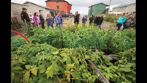 VEGETABLE JUNGLE— The Bachelder's lush garden gets a look from the Garden Tour crowd Sunday.