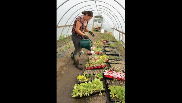GARDENS AT PILGRIM— Tasha Lee waters seedlings inside the hoop house at Pilgrim Hot Sprints. The hoop house proves a protective environment for the seedlings to grow until they are ready to be replanted outside.