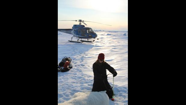 POLAR BEAR STUDIES— U.S. Fish and Wildlife Service biologist Michelle St. Martin takes measures on an adult female polar bear captured on sea ice west of the Red Dog Mine Port site.